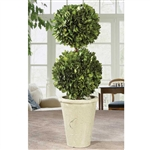 Preserved Boxwood Topiary - Double Ball 19""