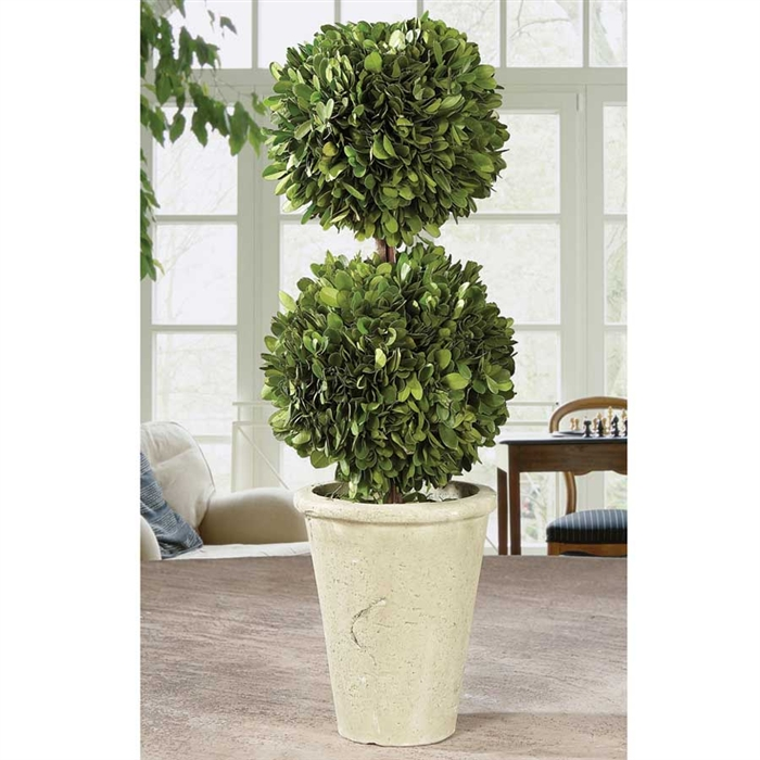 Preserved Boxwood Topiary - Double Ball 19